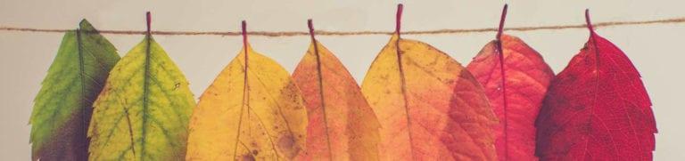 bunte Blätter an einer Leine